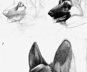 dog and how to draw image