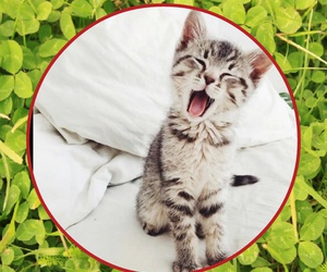 naturaleza and gatito lindo image