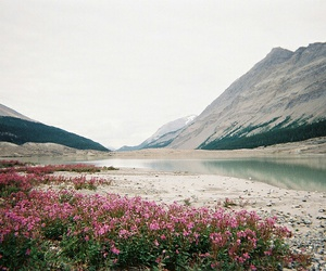 beautiful, flowers, and mountains image