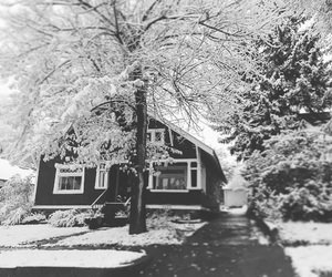 black and white, christmas, and cold image