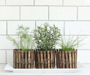 clothes pin, decoration, and plants image