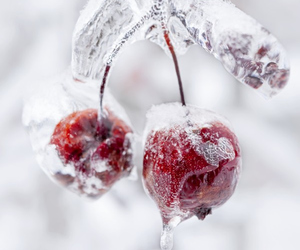 winter, cherry, and nature image