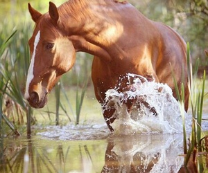 horse, water, and animal image
