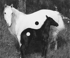 horse, black and white, and black image
