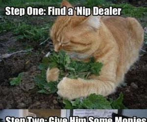 funny, cat, and high image