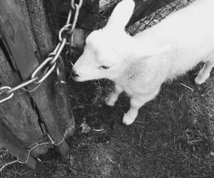 animal, baby, and black and white image