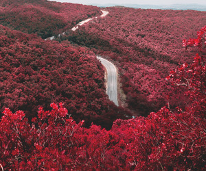 red, flowers, and nature image