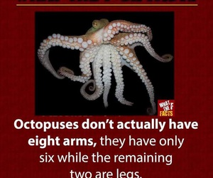 fact, octopuses, and true image