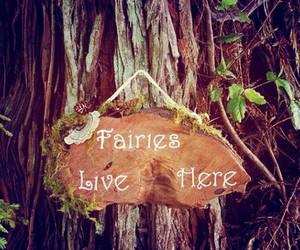 fairy, magic, and nature image