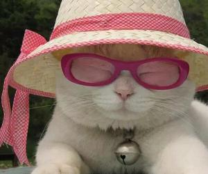 adorable, hat, and animals image