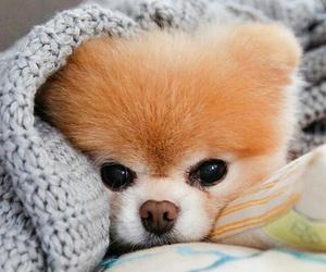 animals, sweet, and dog image