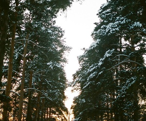 arbres, hiver, and neige image