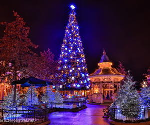 christmas tree, december, and winter image