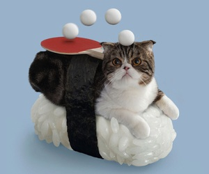 cat, sushi, and cute image
