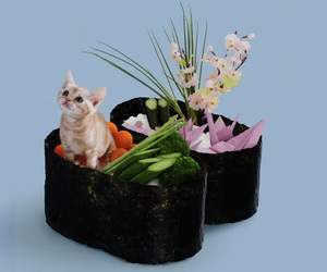 cat, sushi, and kitty image
