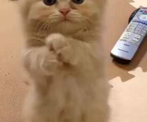 cat, cute, and treat image