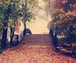 bridge, fall, and leaves image