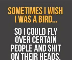 bird, funny, and quote image