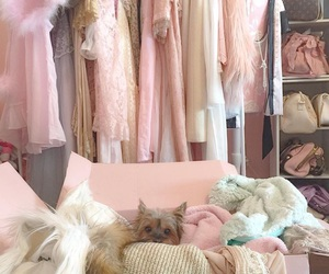 clothes, pink, and dog image