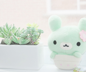 plants, cute, and green image
