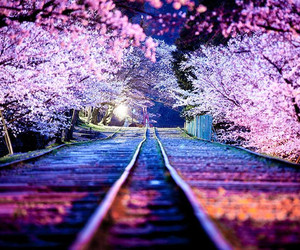 japan, sakura, and night image