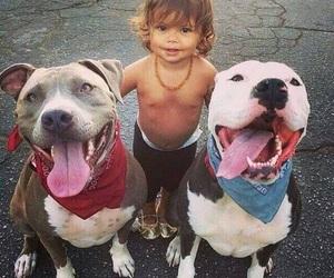 baby, dog, and animals image