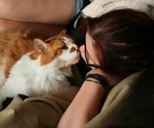 kitty, cute, and love image
