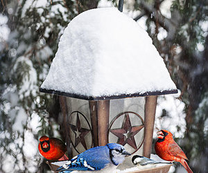 birds, winter, and nature image