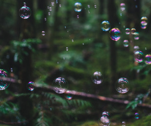 bubbles, nature, and forest image