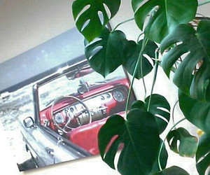 car, green, and plant image