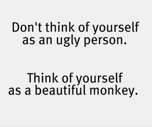 monkey, beautiful, and funny image