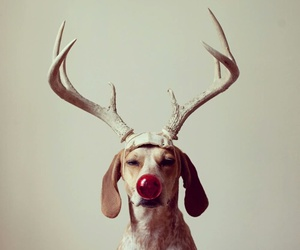 dog, christmas, and funny image