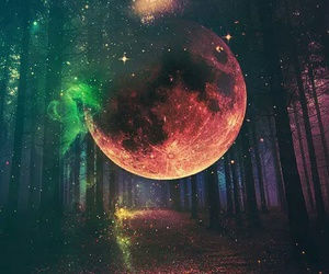 moon, forest, and stars image