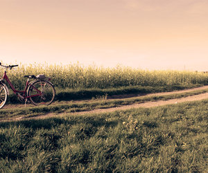 bicycle, landscape, and add a tag image