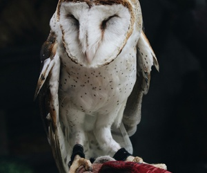 animals, owls, and nature image