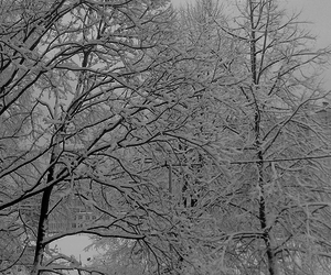 photography and winter image