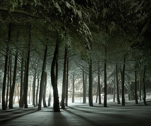 forest, snow, and light image
