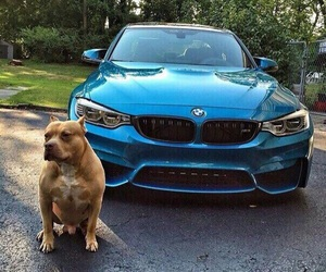 bmw, dog, and car image