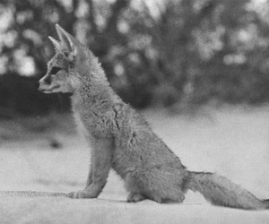 fox and cute image