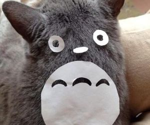 totoro, cat, and animal image