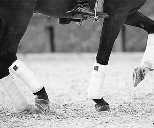 horse, dressage, and black image