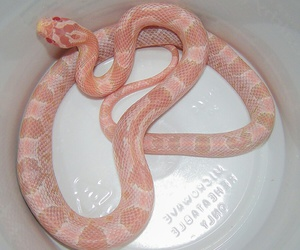 pastel, snake, and cute image