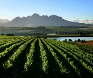 nature, franschhoek, and southafrica image