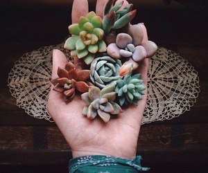 nature and succulent image