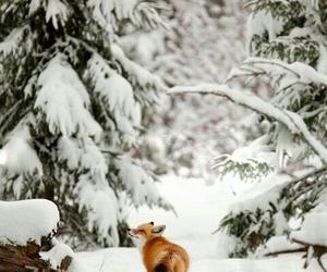 fox, snow, and winter image