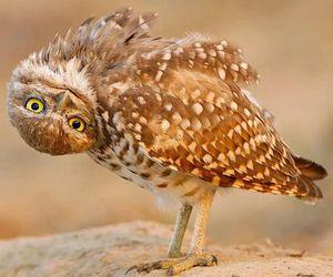 owl, animal, and funny image