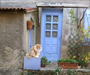 cat, france, and study abroad image