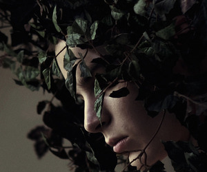 ivy, leaves, and vines image