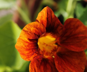 blume, orange, and sommer image