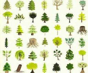 background nature image